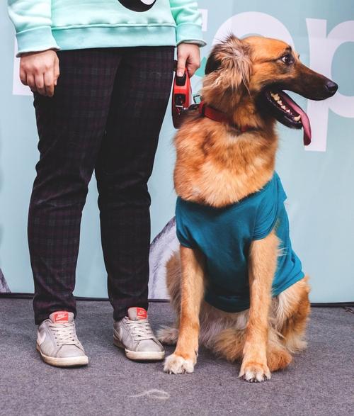 Royal Canin Gastro Intestinal Dog   Order Online